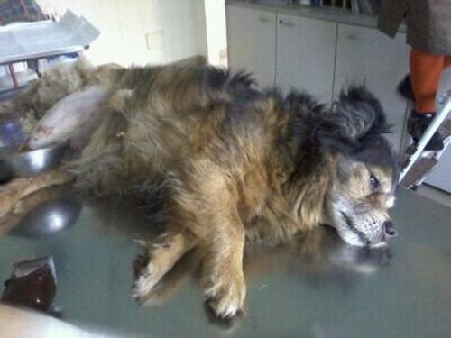 cane maltrattato 100% animalisti