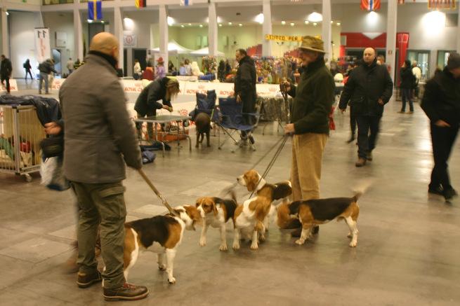 Esposizione canina in fiera a padova ecco i premiati for Fiera arredamento padova