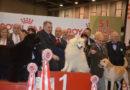 Ultimi giorni per l'iscrizione alla 55esima edizione della mostra dei cani in fiera a Padova