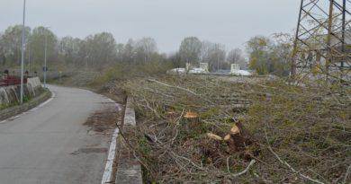 Migliaia di euro e 300 alberi: il prezzo del passaggio di Lorenzoni & Co. dall'ambientalismo di lotta a quello di governo
