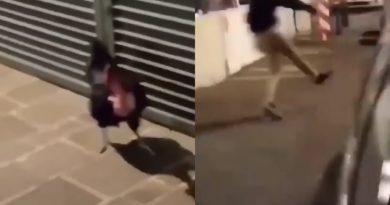 Vandalismi e galline brutalizzate: Padova, abbiamo un problema