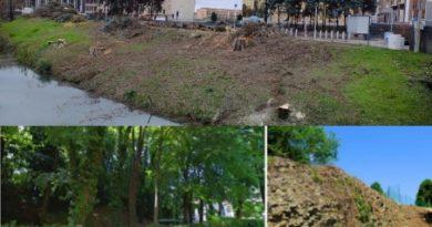 """Comitato difesa alberi e territorio all'attacco dell'amministrazione comunale: """"distruzione programmatica del verde"""""""